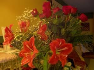 Цветы красного цвета