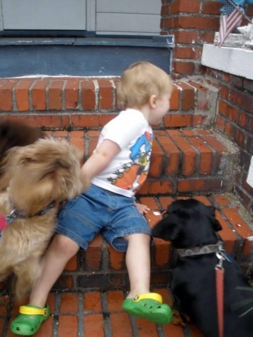 Мальчик с собаками