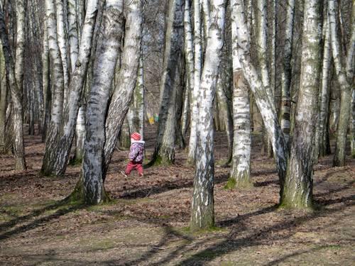 Мальчик гуляет по лесу