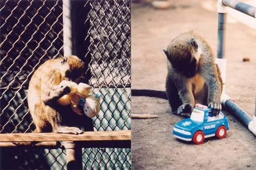Обезьяны играют в игрушки
