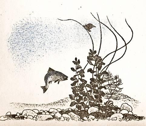 А. А. Фет - Рыбка